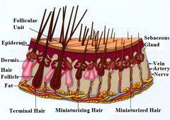 castor-oil-for-hair-growth-2